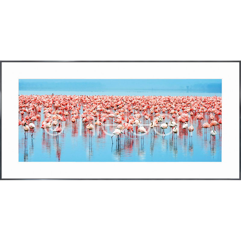 "Gerahmtes Bild ""Flamingos"" mit Alurahmen Alpha"