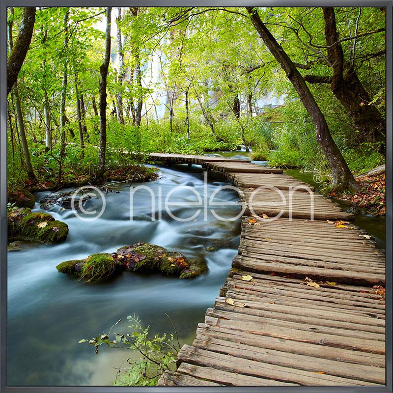 """Gerahmtes Bild """"Footprint Forest"""" mit Alurahmen Alpha"""