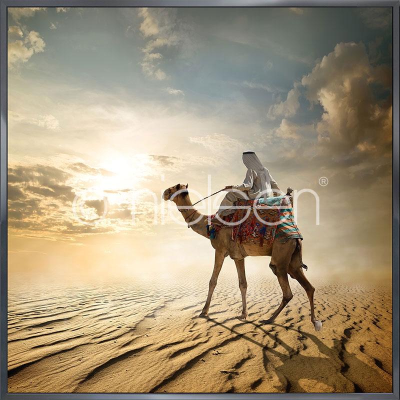 "Gerahmtes Bild ""Cameleer"" mit Alurahmen Alpha"