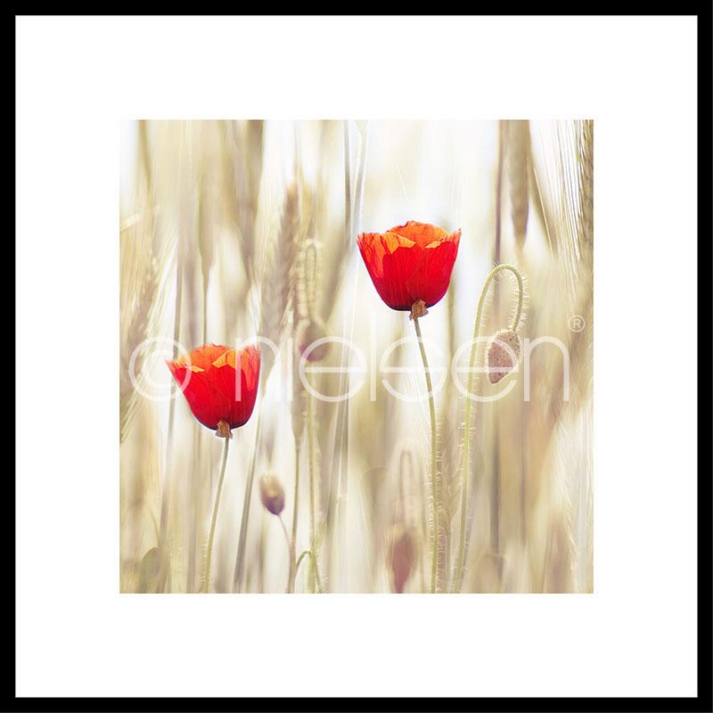 "Gerahmtes Bild ""Flower Cornfield"" mit Alurahmen C2"