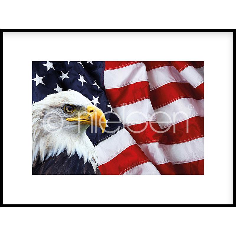 "Gerahmtes Bild ""Eagle USA"" mit Alurahmen C2"