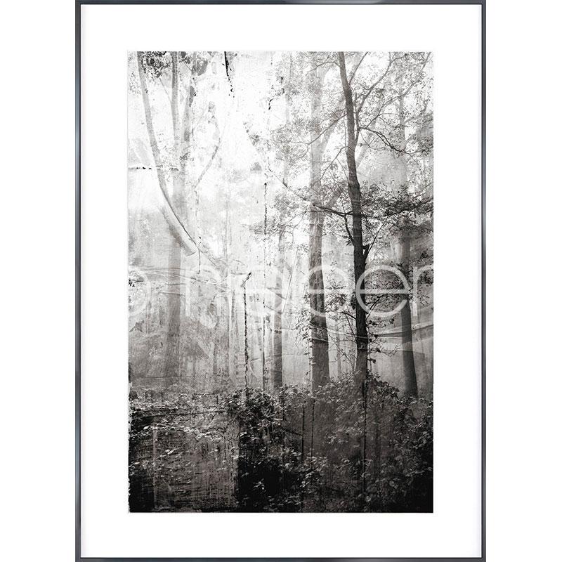 """Gerahmtes Bild """"Forest Black and White"""" mit Alurahmen Alpha"""